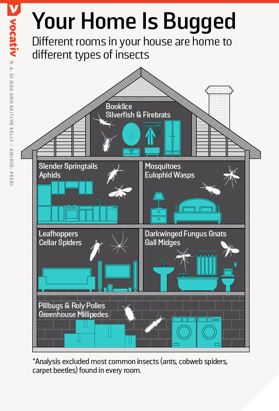 Different rooms in your house are home to different types of insects