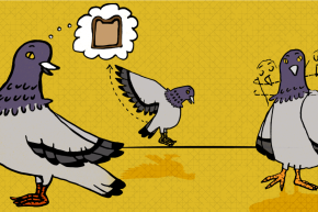 On Friday The 13th, Remember: Pigeons Are Superstitious, Too