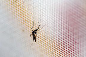 Here Are The Wildest Zika Virus Conspiracy Theories