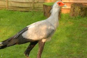 This Bird's Kicks Can Crush Your Bones