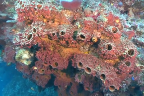 In the Beginning, There Were Sea Sponges