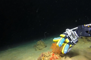 Soft Robot Fingers Are About To Revolutionize Ocean Research