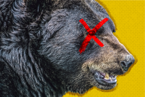 Bad News, Bears: Hunting Is On The Rise