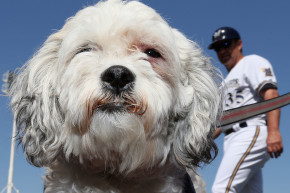 A Brief History Of The Milwaukee Brewers Hank The Dog Conspiracy