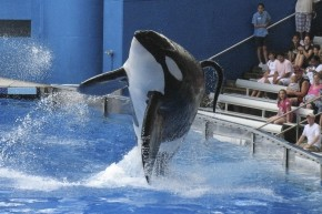SeaWorld Fans Devastated By End Of Captive Orca Breeding