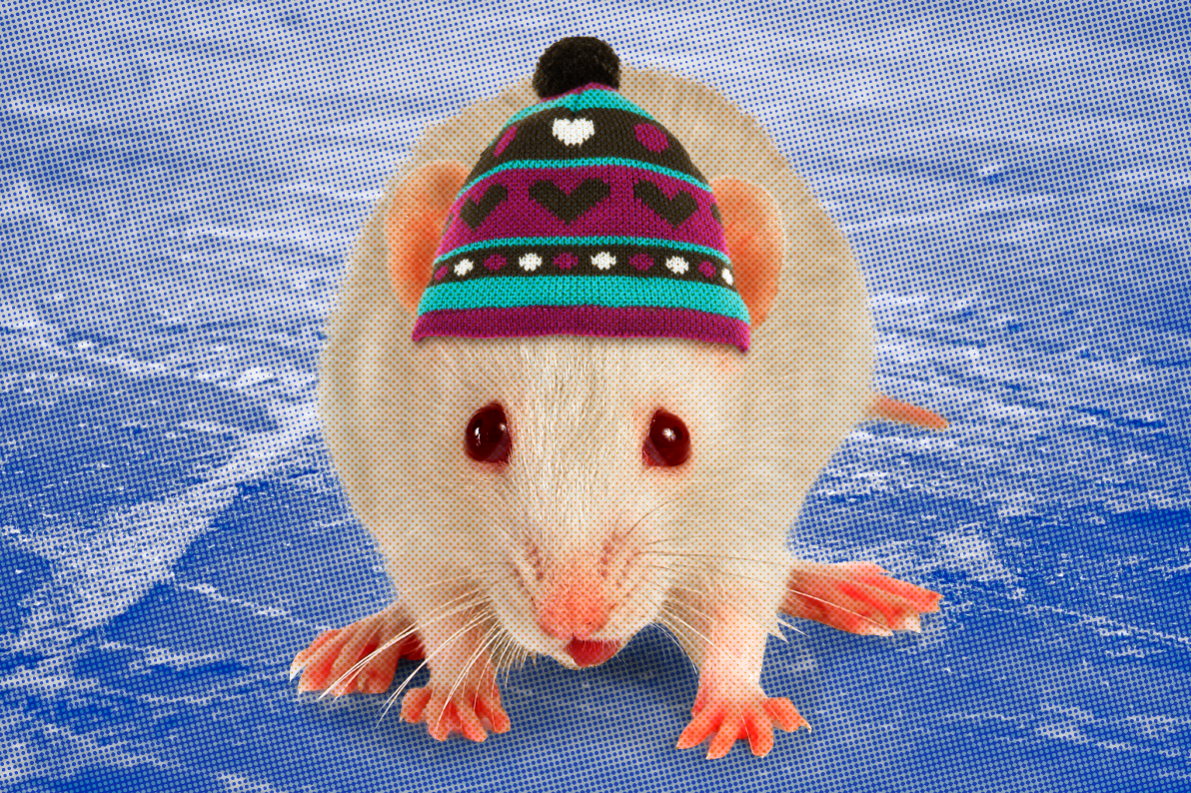 Lab Mice Are Freezing And It S Ruining Science Vocativ