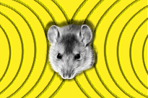Study Links Cell Phone Radiation To Cancer In Rats—But Don't Panic