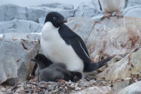 Climate Change Is Going To Kill Off The Penguins
