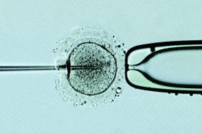 Scientists Say '3-Parent Baby' IVF Technique Is Safe