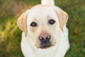 Amazing Dogs Can Smell When Diabetics Need Help