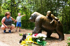Slain Gorilla's Sperm Likely To Join 'Frozen Zoo'