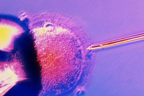 When The Custody Battle Is Over A Frozen Embryo