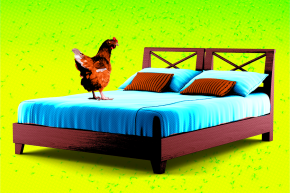 Could Tying A Live Chicken To Your Bed Prevent Malaria?