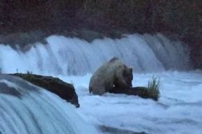 Hell Yeah, The BearCam Is Back