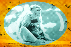 Zika Vaccine Trial Shows 100% Protection In Rhesus Monkeys