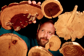 """How Ancient Solar Storms Etched """"Secret Clocks"""" In Tree Rings"""