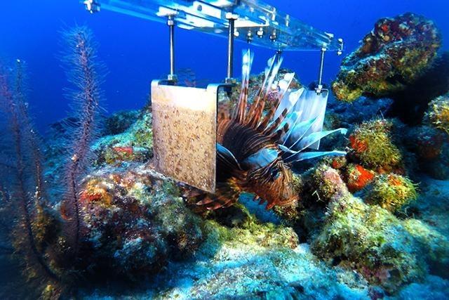 640_lionfish robot