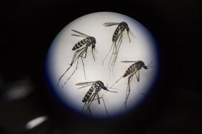 Zika Versus Miami, Sports Edition