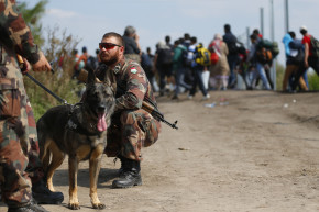 Syrian Refugees Share Aftermath Of Dog Attack At Hungary's Border