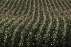 Monsanto Wants To Change Farming With In-Field Sensors