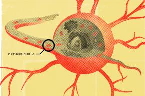 Scientists Discover Mechanism For Parkinson's Disease