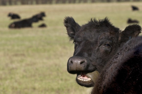 We Finally Know How Mad Cow Disease Eats Your Brain