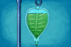 Plant-Derived Drug Puts Cancer Into Remission