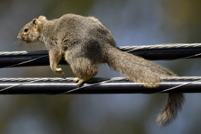 Hungry Squirrel Knocks Out Electronic Voting Machine In Ohio County