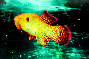 Human Pollution Is Causing This Fish Species To Rapidly Evolve
