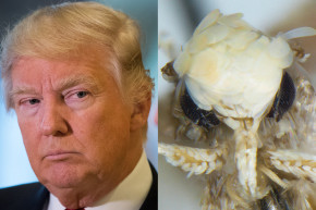 New 'Donald Trump Moth' Has Golden Hair And Tiny Genitals