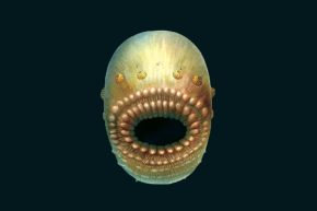 Our Oldest Ancestor Was Tiny Floating Bag With Huge Mouth And No Anus