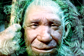 Neanderthals Used Plants Like They Were Aspirin And Penicillin