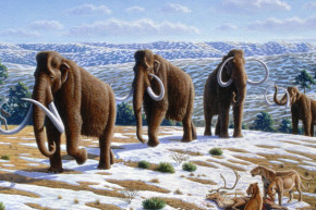 The Genomes Of Earth's Last Mammoths Were An Absolute Mess