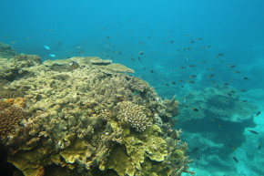 It's Getting Harder And Harder To Save The Great Barrier Reef