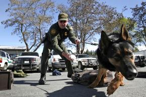 To Avoid Overwork, Border Patrol Pups To Get Health Tracking Collars