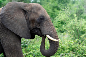 WWF: Endangered Species Being Poached In Protected Areas