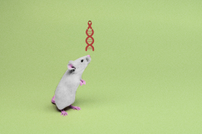 Gene Editing Used To Wipe Out HIV In Infected Mice