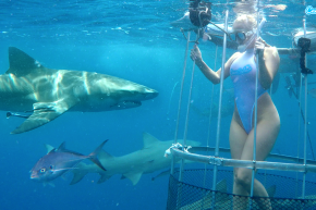 Cam Girl Attacked By Shark While Filming