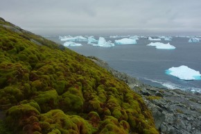Antarctica Is Getting Greener, And That's Not A Good Thing