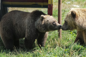 These Bears Were Rescued From Abusive Circuses
