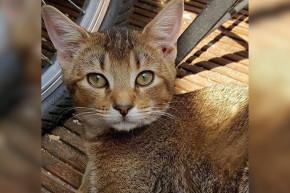 Why Was A Gay Writer Denied Cat Adoption?